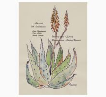 Aloe vera (A. barbadensis) Botanical One Piece - Short Sleeve