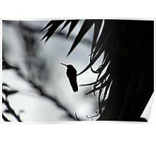 Hummingbird Silhouette II Poster