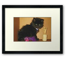 Ollie Black Domestic Kitten with toys Framed Print
