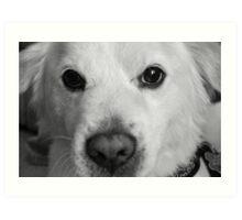 Puppy Pout Art Print