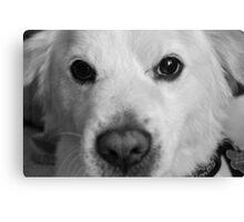 Puppy Pout Canvas Print