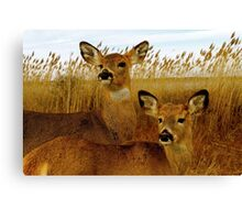 Deer Side by Side Canvas Print