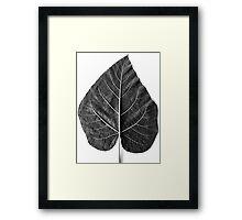 Paulownia Framed Print