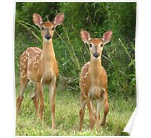 Curious Fawns Poster