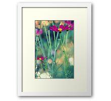 Cosmos flower in green garden bokeh light Framed Print