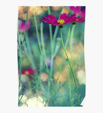 Cosmos flower in green garden bokeh light Poster