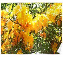 Azalea yellow Poster