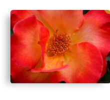 Macro Rose Canvas Print