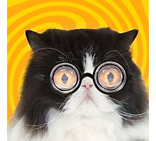 Black and White Persian Cat wearing glasses Photographic Print