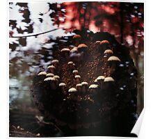 Gefleckte Pilz #1 Poster