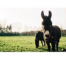 Donkey and Pony Photographic Print