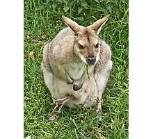 Mrs Wallaby Photographic Print