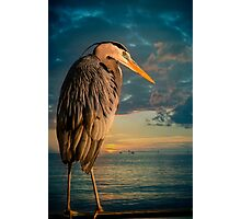 Great Blue Heron and Blue sunset Photographic Print