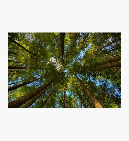 A Canopy of Trees Photographic Print
