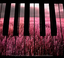 Candy Fields And Melodies by Stephanie Rachel Seely