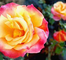 Rose color trio by ?? B. Randi Bailey