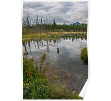 Forest Pond Near The Kicking Horse River in the Canadian Rockies Poster