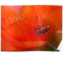 It's a ladybug world Poster