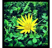 Random flower Photographic Print