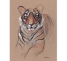 UNFINISHED BUSINESS - Original Tiger Drawing - Mixed Media (acrylic paint & pencil) Photographic Print