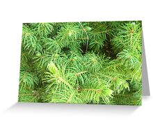 Evertrue Evergreen Greeting Card
