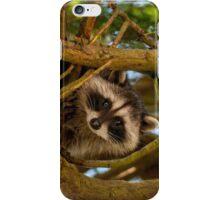The Raccoon iPhone Case/Skin