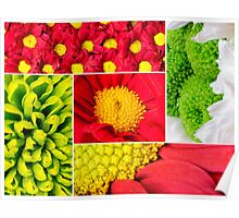 Photo collage of flowers close-up Poster
