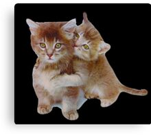 Love Kittens Canvas Print