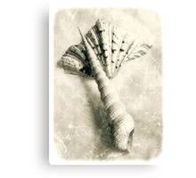 Sea Shells #6 Canvas Print