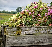 Flower Bed by Johanne Brunet