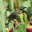 Bird on Cactus by Alberto  DeJesus