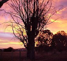 Sunrise at Bothwell Tasmania by Carol Peck