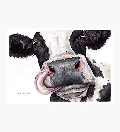 Dairy Cow Photographic Print