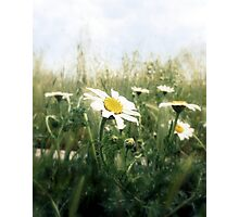 the flowery may Photographic Print