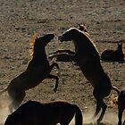 Namibian Wild Horses by Vanessa  Warren