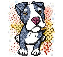 Blue Pit Bull Puppy Graphic Photographic Print