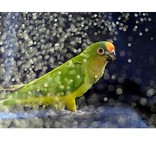 This Photo Shoot Is Fun - Peach-Fronted Conure - NZ Photographic Print