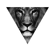 lion inside Photographic Print