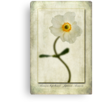 Japanese Anemone Canvas Print
