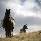Sunlit fell ponies by Mitch  McFarlane