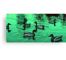 Duck Serenity  Canvas Print