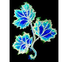 Leaves of Blue Photographic Print