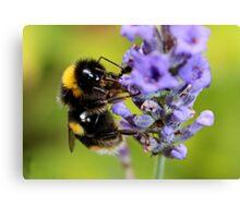 Bumble Bee & Lavender Canvas Print