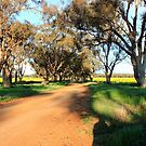 A Dirt Road in the Canola by Carol James