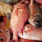 Soldier Fish - Pohnpei, Micronesia by Alex Zuccarelli