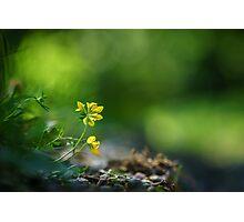Yellow wildflower Photographic Print