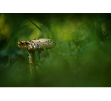 Mushroom in the grass Photographic Print