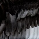black swan feathers by nadine henley