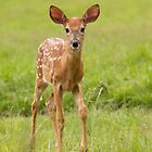 Fawn Memories by Jim Cumming