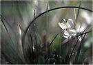 Spring in Miniature by LouiseK